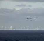 Windpark und Vogelschwarm bei Helgoland