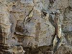 strangulierte Vögel auf Helgoland