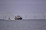 Windpark und Katamaran bei Helgoland