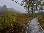 log paved path in peat bog Ewiges Meer