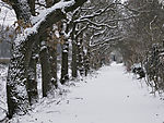 snow on country lane