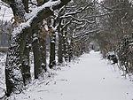 Schnee auf Feldweg