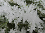 hoar frost crystals