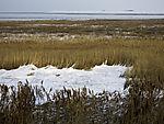 Schnee im Schilf, Phragmites sp.
