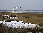 snow in reed, Phragmites sp.
