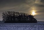 little forest in winter