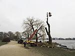 tree lumbering at lake Alster