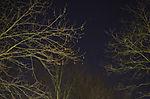 Orion and Sirius over Hamburg