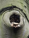 tree Fungus on Beech tree