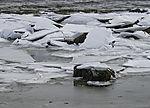 Eischollen am Strand