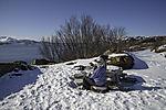 picknick in winter
