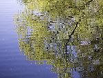 spring reflection on Isebek Channel