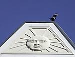 Magpie over pediment with sun symbol, Pica pica