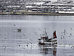 Fischerboot und Möwen im Risöysundet
