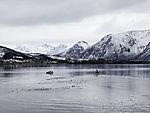 Fischerboote und Möwen im Risöysundet