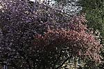 colourful spring in Hamburg