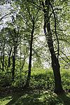 Beech spring, Fagus sp.