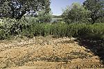 Trockenheit in Cornalvo-Talsperre