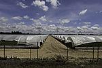 Gewächshäuser aus Plastik in Dehesa de Abajo