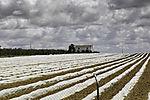 horticulture in Dehesa de Abajo