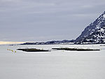 salmon farm in Raftsundet