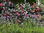 bunter Blumenfrühling