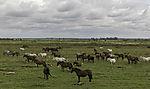 Viehzucht in Spanien