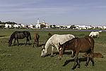 Pferde vor Eremita del Rocio