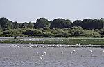 bird paradise Charco de la Boca