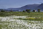 Sommer bei Tromsö