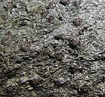 mica slate with garnets