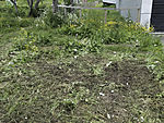 plant destruction from lawn mower