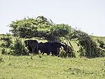 Rinder suchen Schatten unter Bäumen