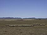 trockene Schafsweide in Südspanien