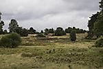 Luneburg Heath near Undeloh