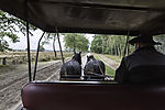with horse-drawn carriage in Luneburg Heath