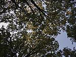Morgenlicht in Baumkronen