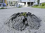 Pflanzen brechen durch Asphalt