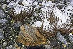 bunter Stein am Strand