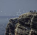 Touristen am Vogelkliff auf Helgoland
