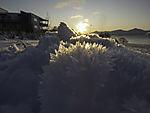 snow crystals backlit