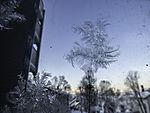 frost pattern on glass pane