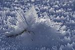 soft snow crystals on stem