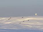 Flugzeugstaffel über Insel Kvalöya