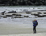 femal photographer with Grey Seals; Halichoerus grypus