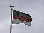 Herring Gull on flag of island Helgoland, Larus argentatus