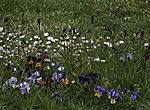 spring meadow on island Helgoland