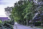 Straßenbäume