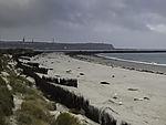 neugeborene Kegelrobben am Strand der Helgoländer Düne