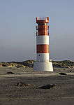 Grey Seals and lighthouse, Halichoerus grypus